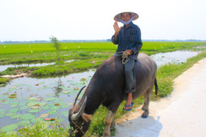 Top 12 Things To Do In Hoi An 7