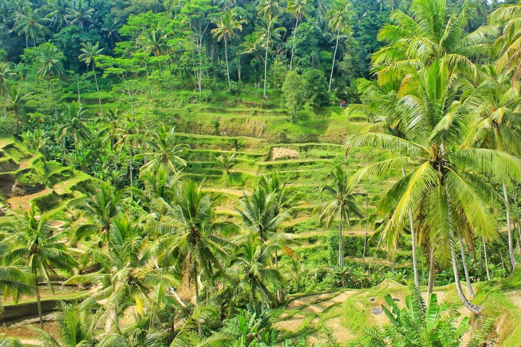 A Quick Guide To Bali