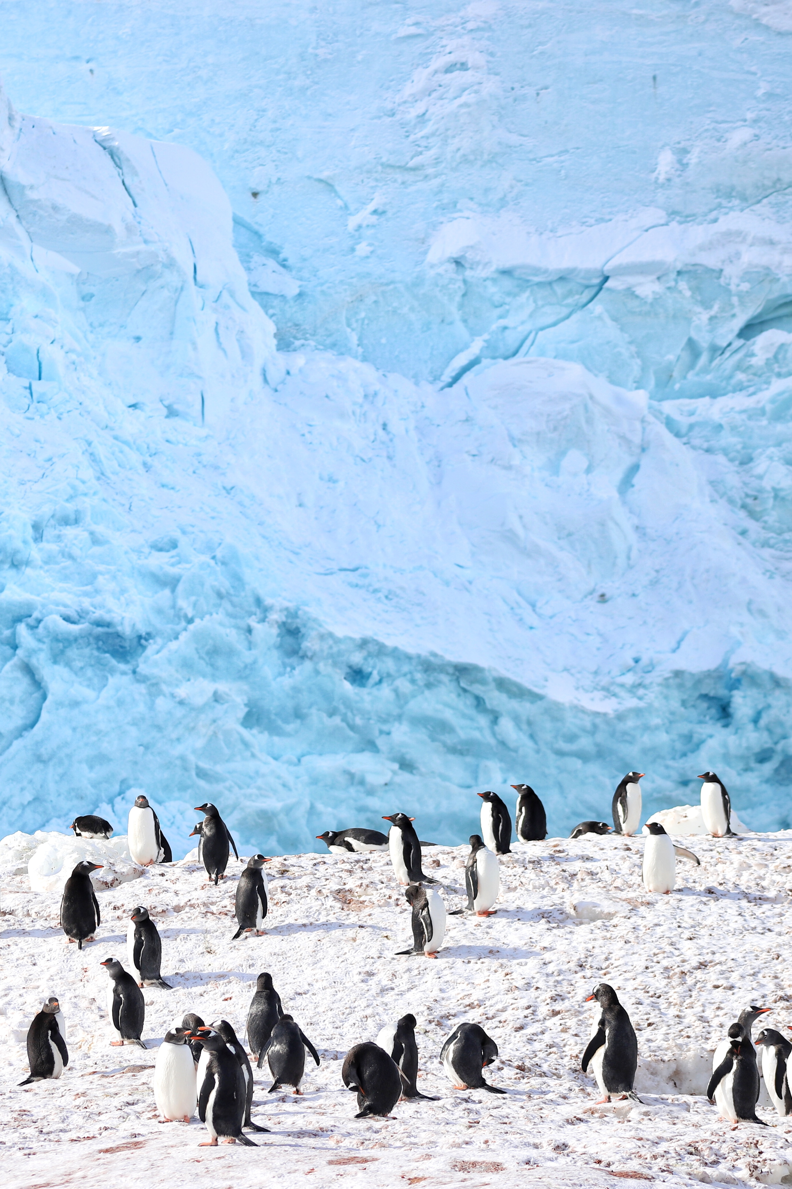 Antarctica places you must visit in south america the for Can i visit antarctica