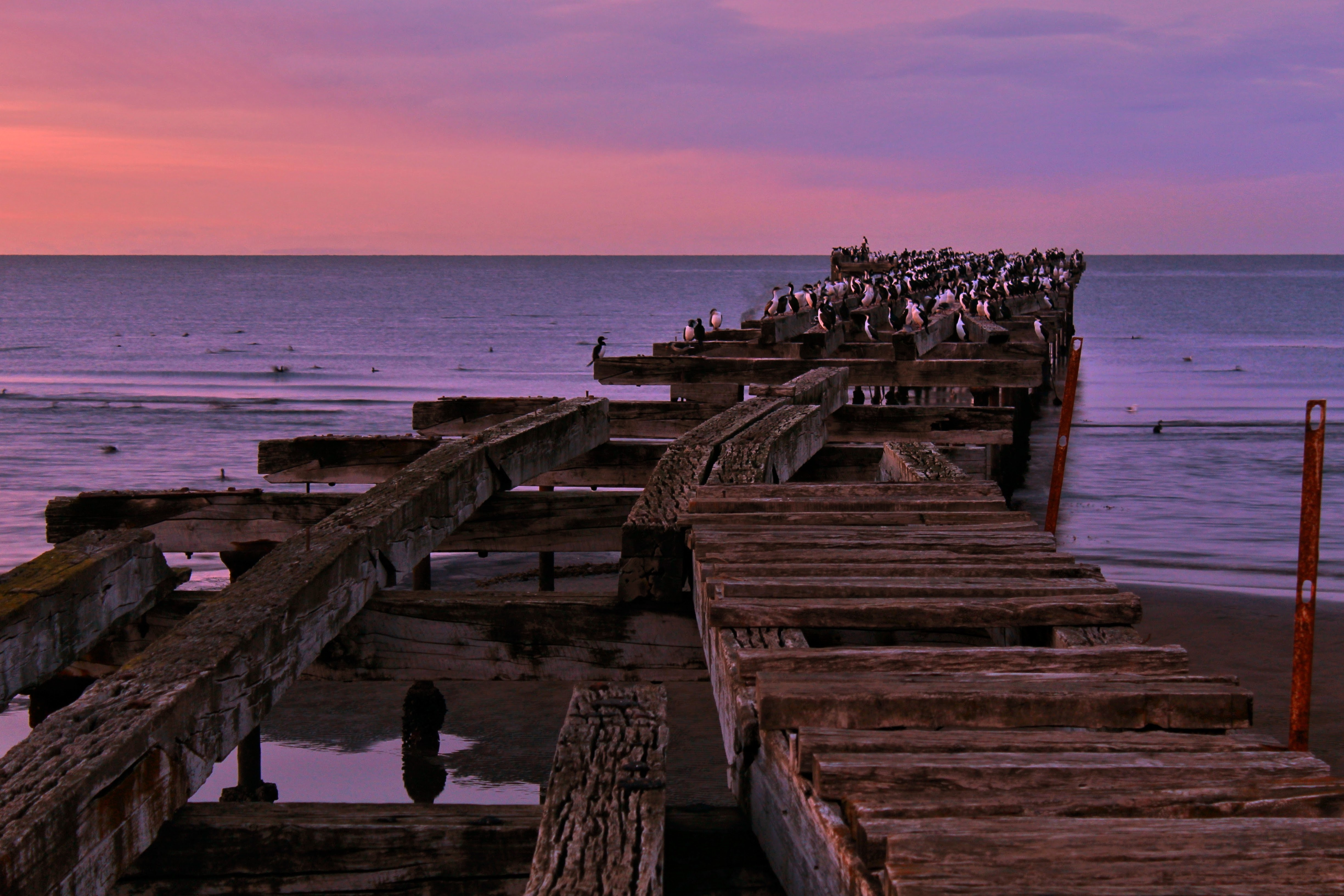 Two weeks in Chile - Punta Arenas